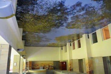 Фотопечать на натяжном потолке деревья